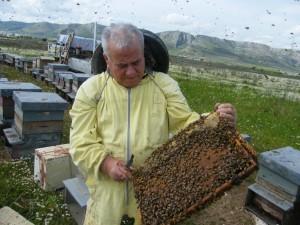 Il miele del Gargano è il più buono d'Italia