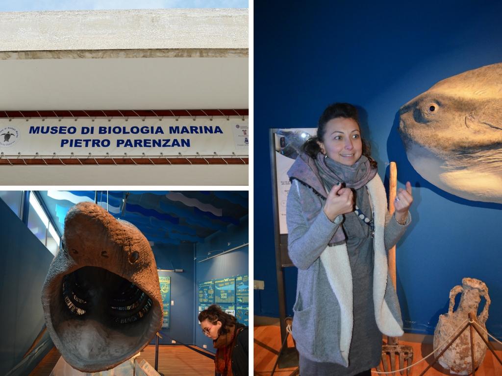 Museo di Biologia Marina - Porto Cesareo